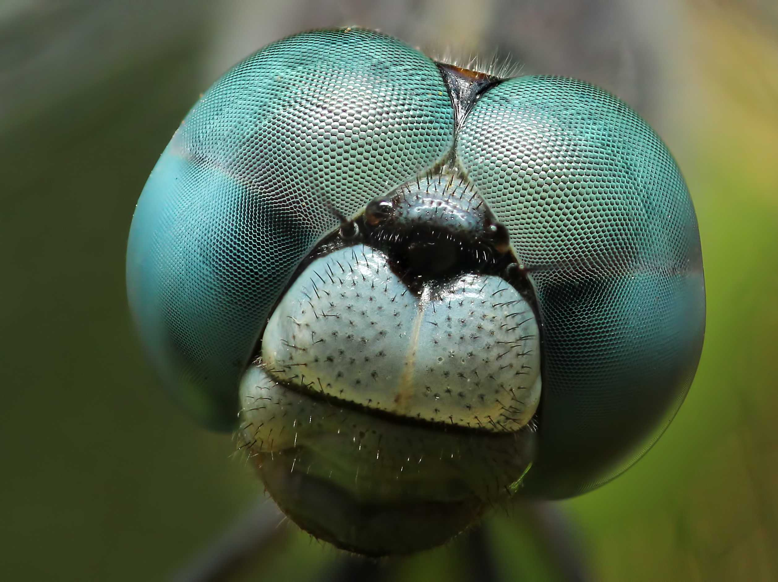 magnified-photos-of-earths-most-underappreciated-animals